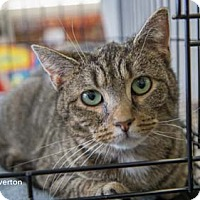 Adopt A Pet :: Riverton - Merrifield, VA