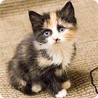 Adopt A Pet :: Jo - Chicago, IL