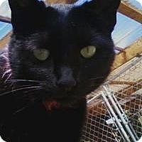 Adopt A Pet :: Sparky - Calimesa, CA