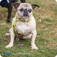 Adopt A Pet :: Buttons - Grapevine, TX