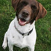 Adopt A Pet :: Dutch - Lake Odessa, MI