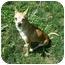 Photo 2 - Chihuahua Dog for adoption in Milwaukee, Wisconsin - Brownie