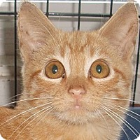 Adopt A Pet :: Hickory - Germansville, PA