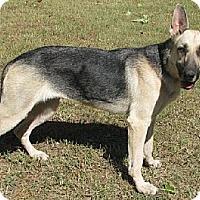 Adopt A Pet :: Gracie - Hernando, MS