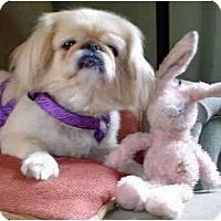 Adopt A Pet :: Prissy - Mays Landing, NJ