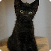Adopt A Pet :: Mildred - Sacramento, CA