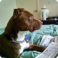 Adopt A Pet :: Kenya - click for video! - Los Angeles, CA