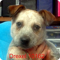 Adopt A Pet :: Drexel - Greencastle, NC