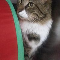 Adopt A Pet :: Rocky - Winder, GA