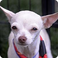 Adopt A Pet :: Radar - Meridian, ID
