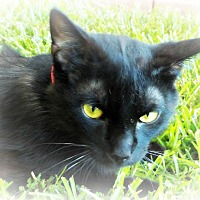 Adopt A Pet :: Mista Luva - Ocean Springs, MS