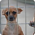 Adopt A Pet :: Madrid