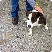 Adopt A Pet :: Roxy - Shelter Island, NY