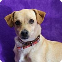 Adopt A Pet :: Bernie - Yucaipa, CA