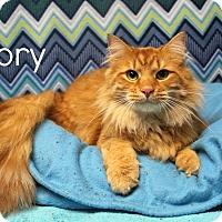 Adopt A Pet :: Rory - Melbourne, KY