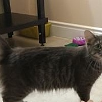 Adopt A Pet :: Emily - Woodstock, ON
