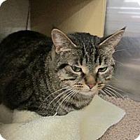 Adopt A Pet :: Bluebell - Warminster, PA