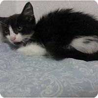 Adopt A Pet :: Marie - Lakeland, FL