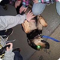 Adopt A Pet :: Duchess - Wallaceburg, ON