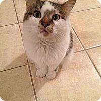 Adopt A Pet :: Sampson - East Hanover, NJ
