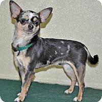 Adopt A Pet :: Patsy - Port Washington, NY