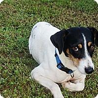 Adopt A Pet :: Josie - Hagerstown, MD