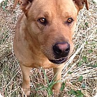 Adopt A Pet :: Buddy--living in a field! - Valley Springs, CA