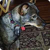 Adopt A Pet :: River - Kingwood, TX