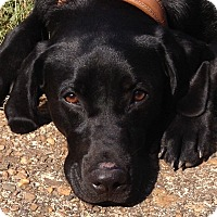 Adopt A Pet :: Lexy - Hagerstown, MD