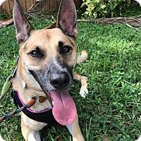 Adopt A Pet :: Mason - Ft. Lauderdale, FL
