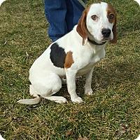 Adopt A Pet :: Chantilly - Cleveland, OH