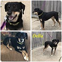 Adopt A Pet :: Della - Garden City, MI