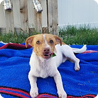 Adopt A Pet :: Gimli (FORT COLLINS) - Fort Collins, CO
