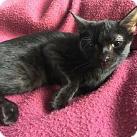 Adopt A Pet :: Salem - Chandler, AZ