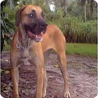 Adopt A Pet :: Pixie - West Melbourne, FL