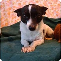 Adopt A Pet :: Fancy - Arlington, TX
