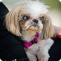 Adopt A Pet :: Faith - Phoenix, AZ