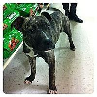 Adopt A Pet :: Kitty - Louisville, KY