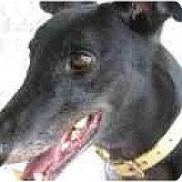 Adopt A Pet :: Tripp - St Petersburg, FL