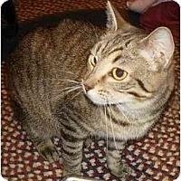 Adopt A Pet :: Enaya - Indianapolis, IN