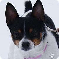 Adopt A Pet :: Boo - Dundee, MI