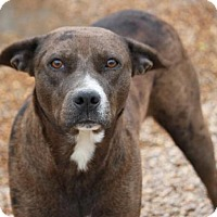 Adopt A Pet :: Fineena (Beautiful Child) - Jewett City, CT