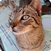 Adopt A Pet :: Willard - Alexandria, VA