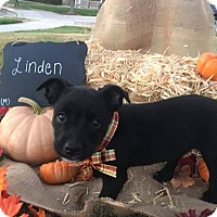 Adopt A Pet :: Linden - Tracy, CA