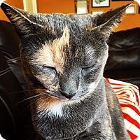 Adopt A Pet :: Pi (COURTESY POST) - Baltimore, MD