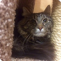 Adopt A Pet :: Chunk in CT - Manchester, CT