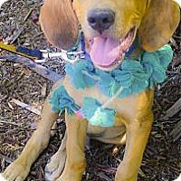 Adopt A Pet :: Smokey big happy pup - Sacramento, CA
