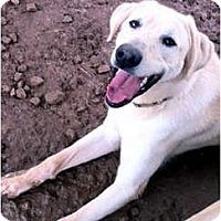 Adopt A Pet :: Bogey - Cumming, GA