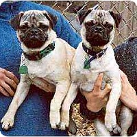 Adopt A Pet :: Otis & Oscar - Clementon, NJ