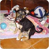 Adopt A Pet :: Shimmer - Orlando, FL